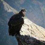 Croix du condor